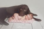 sesje noworodków ze zwierzętami