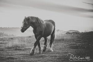 stadnina koni Pieniny