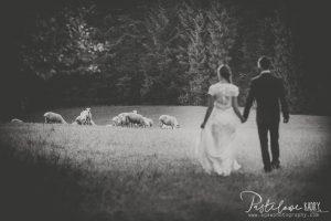 plener ślubny owce